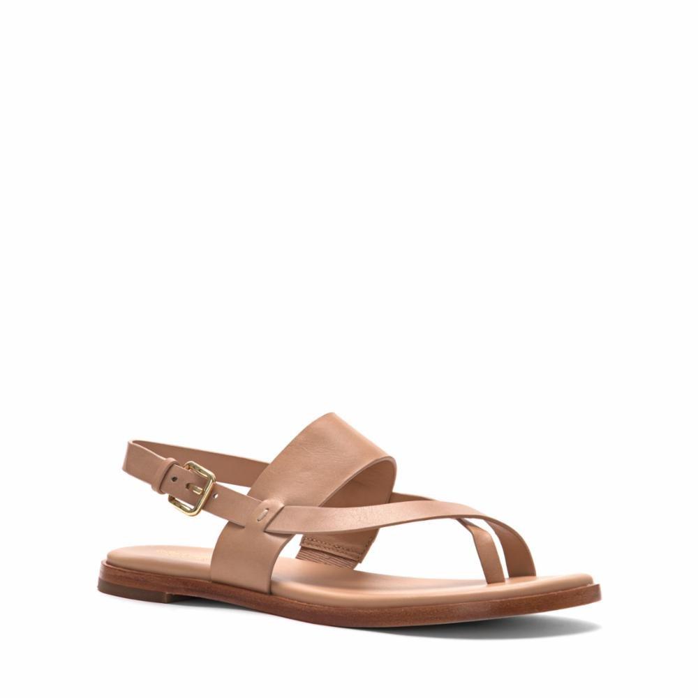 8a2afdfb1c27c Cole Haan Women s Anica Thong Sandal Flat
